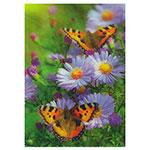 3D-Karte Schmetterlinge