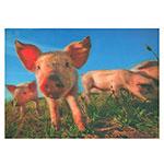 3D-Karte Schweine