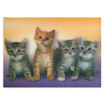 3D-Karte kleine Katzen