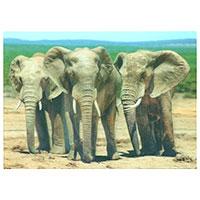 3D-Karte Elefanten