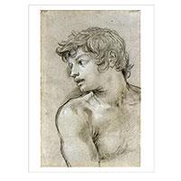 Künstlerpostkarte da Cortona -Kopf eines jungen Mannes-