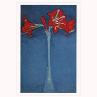 Künstlerpostkarte Mondrian - Amaryllis -