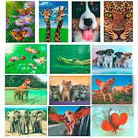 3D-Karten-Set - Tiere -