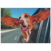 3D-Karte Basset (Hund mit fliegenden Ohren)